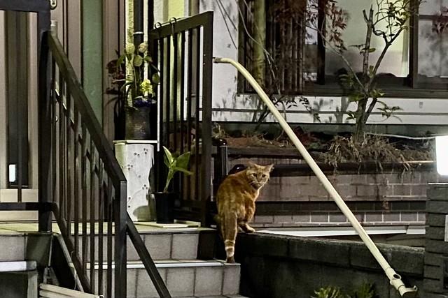 Today's Cat@2021−02−04