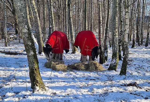 I den stora skogen