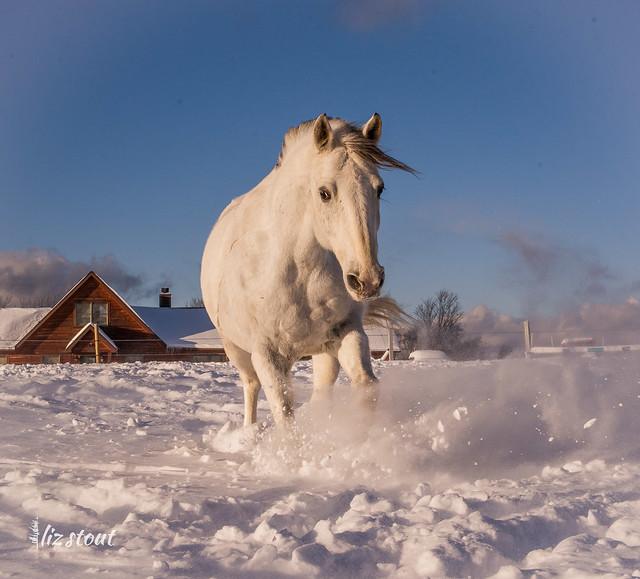 20210203 Horses in Big Snow_128