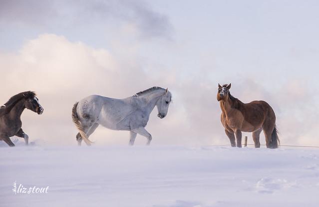 20210203 Horses in Big Snow_58