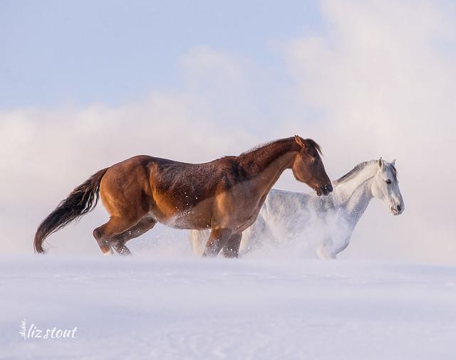 20210203 Horses in Big Snow_37