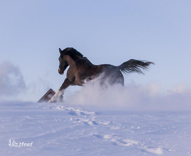 20210203 Horses in Big Snow_45