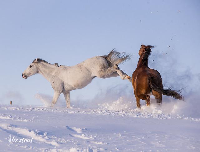 20210203 Horses in Big Snow_42
