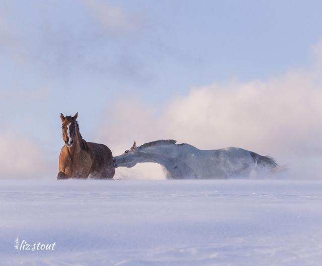 20210203 Horses in Big Snow_32