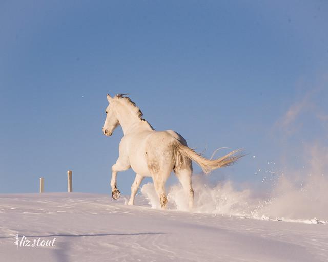 20210203 Horses in Big Snow_8
