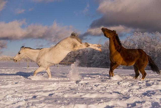 20210203 Horses in Big Snow_166
