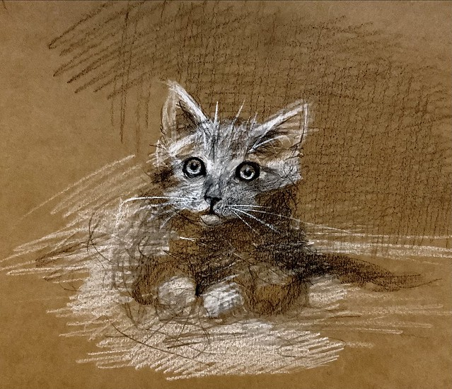Sketch of a Kitten. Derwent Lightfast coloured pencil drawing by jmsw on card.