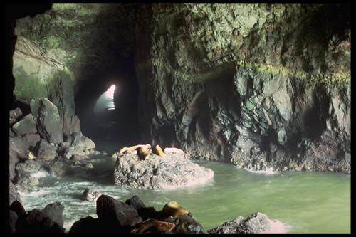 1975: sea lion cave in California