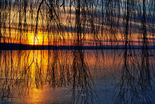 Sunset under weeping willow