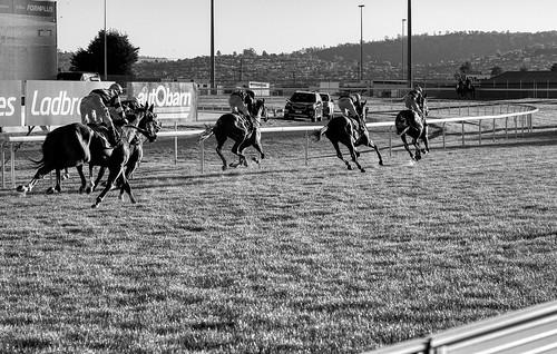 luminosity7 nikond850 launceston tasmania australia mowbrayracecourse horses horseracing thoroughbredhorseracing bw blackandwhite monochrome pullingup shootingintothesun twilight sunsetlight