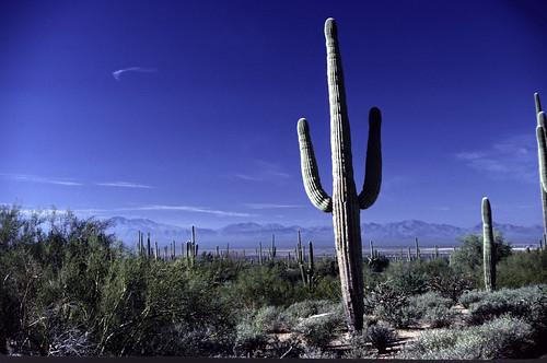 Saguaro National Monument (7)