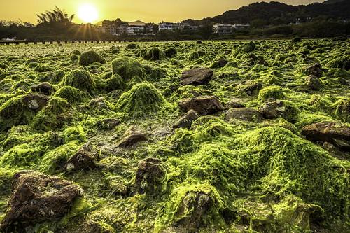 sunrise naichung hongkong seaweed beach