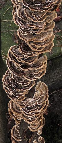 Frilly fungi growing up a tiny tree