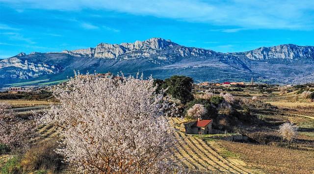 Al pie de la Sierra de Toloño-Cantabria.  Rioja Alavesa.