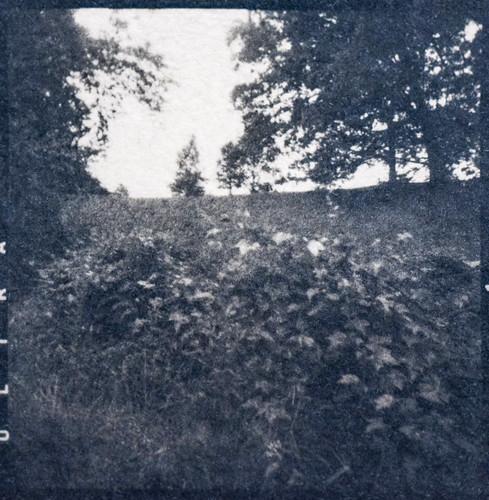 landscape biltmore biltmoreestate uphill asheville northcarolina cyanotype coffeetoned coffeetonedcyanotype 6x6 mediumformat mediumformatnegative alternativeprocess hotpressnaturalfiberpaper ricohflexdiam
