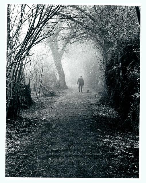Misty Dog Walker 2