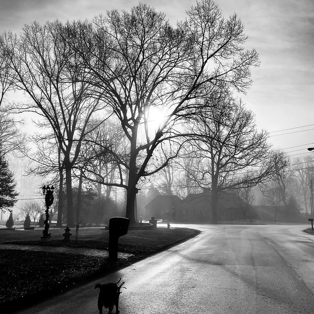Morning walk in the neighborhood (36/365)