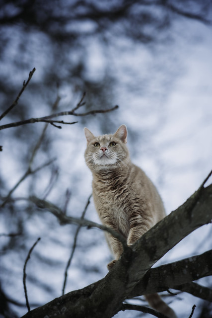 King of the trees