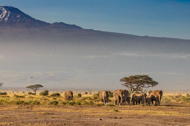 Armchair Traveling - A Misty Morning March in Amboseli National Park, Kenya