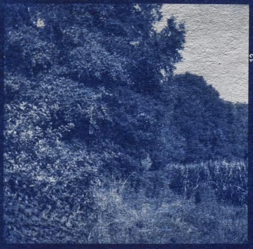landscape trees cornfield biltmoreestate asheville northcarolina cyanotype mediumformat 6x6negative naturalfiber hotpress cyan ricohflexdiam ricohflex twinlensreflex