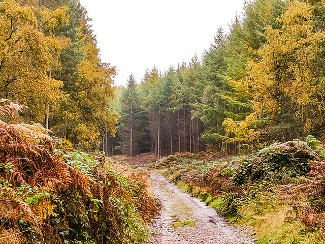 Rainbow Valley, Cannock, England
