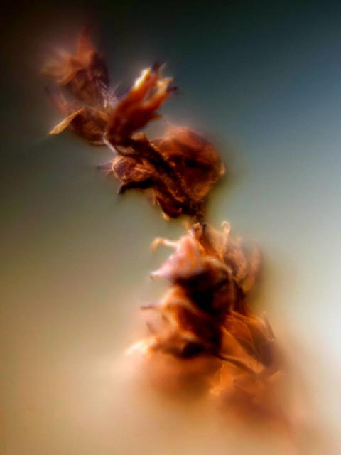 Winter Blume 23 – Natur Makro Kunst Fotografie