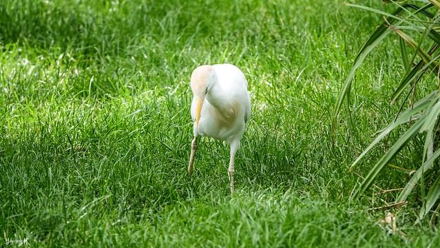 White Bird - 9387