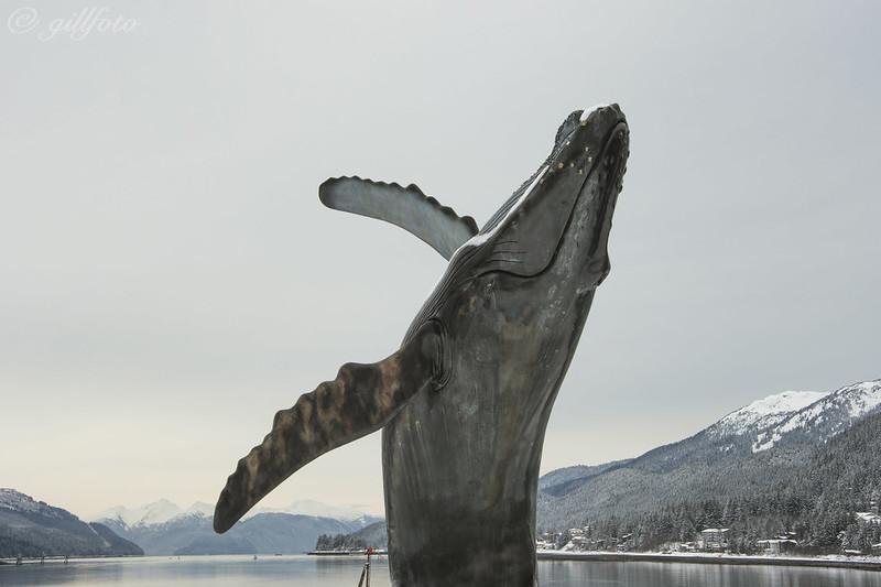 Skip Wallen's Humpback Whale 636