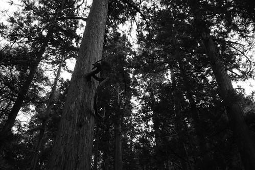 龍が棲む森