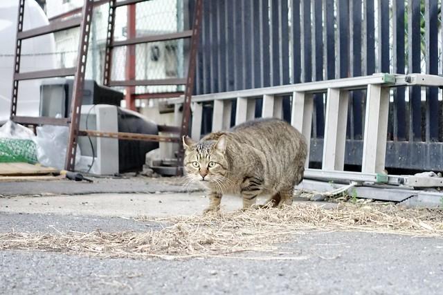 Today's Cat@2021−02−06