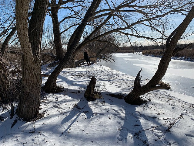 Enjoy the sunshine sitting on a tree on this beautiful winter day at the shore of the frozen Duffins creek in Discovery Bay , Martin's photographs , Ajax , Ontario , Canada , January 30 2021