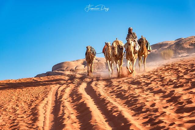 Bedouin riding camel in Wadi Rum desert