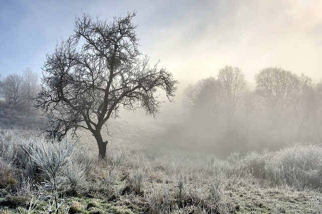 *Winter landscape with fog clearing*