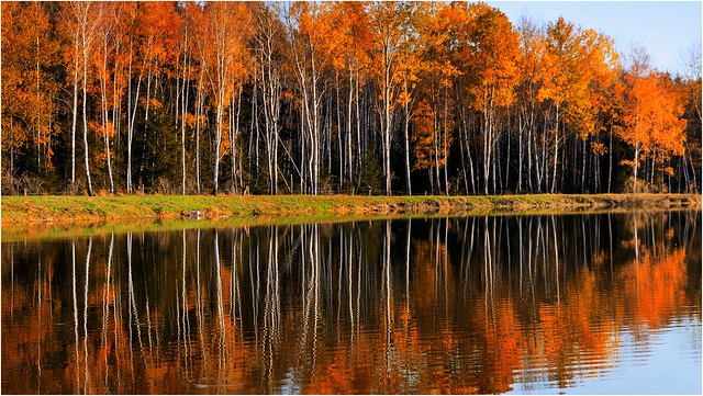 Geteilter Herbst