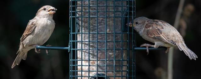 Content Sparrows