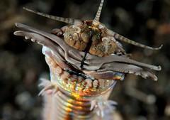 I fossili rivelano l'esistenza di giganteschi vermi predatori