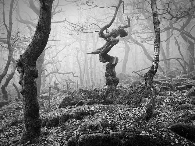 Padley Gorge Mono (Explored 06/02/21)