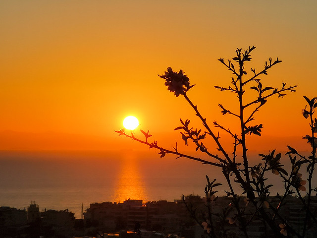 sunset over the flowers