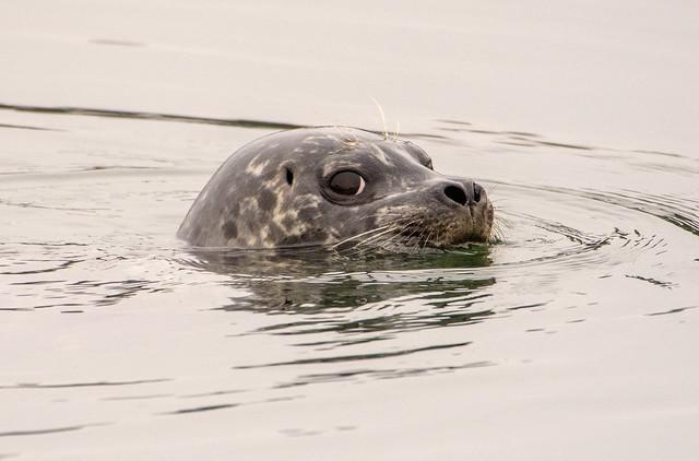 Seal 8