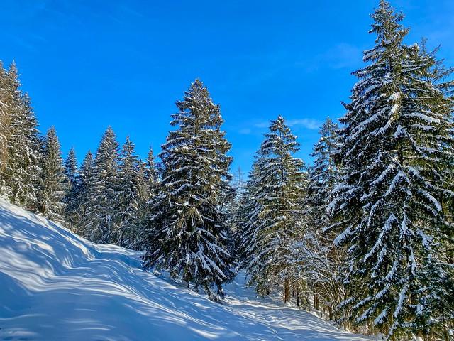 Winter forest on Nußlberg mountain near Kiefersfelden in Bavaria, Germany