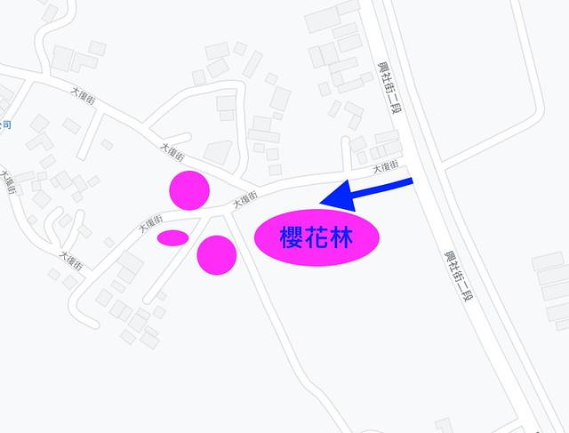 台中新社大復街櫻花林秘境