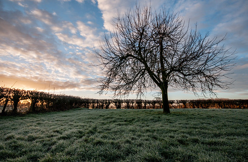 kenn somerset england uk northsomerset landscape orchard trees tree hedge grass green sunrise dawn appletrees sky clouds bluesky sun outdoors outside outdoorphotography agriculture farming rural pastoral winter february d300 field frosty nikon nikond300 nature colour stevetholephotography