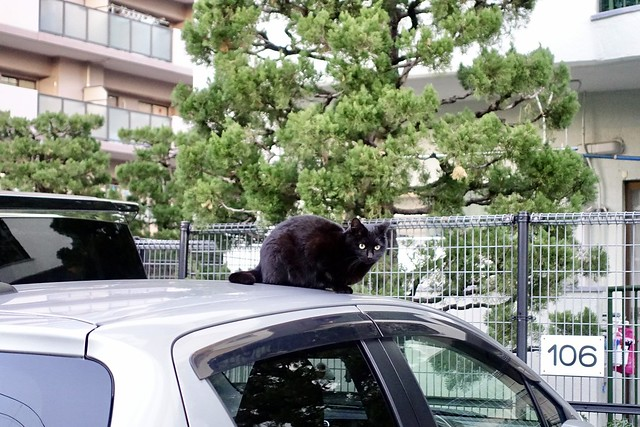 Today's Cat@2021−02−07