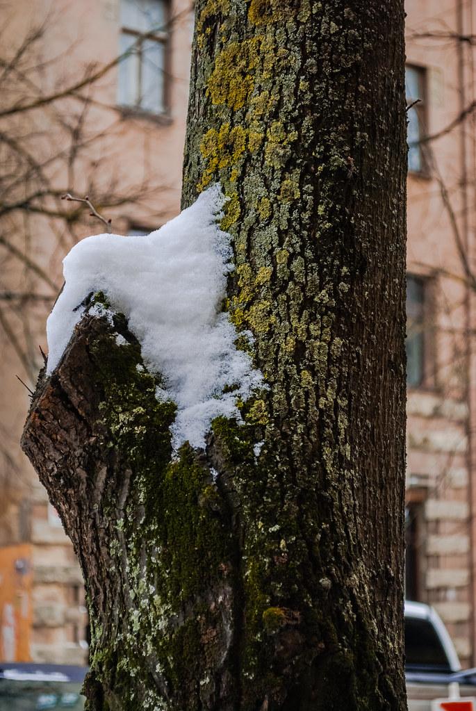Beautiful winter scene. 13:17:34 DSC_0114-2