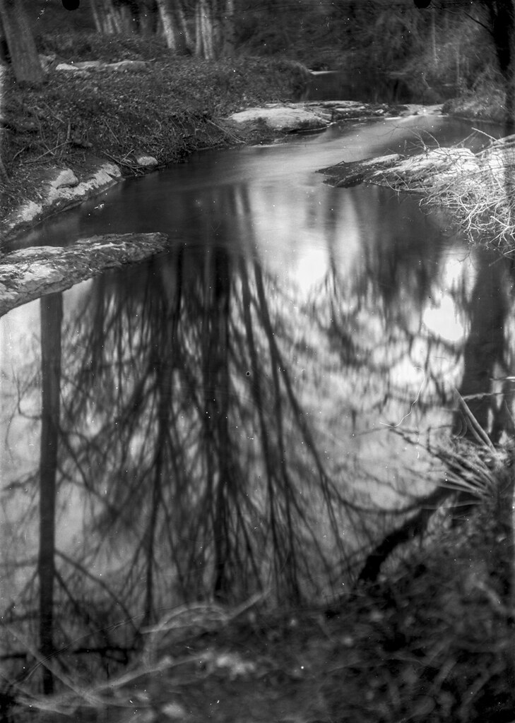 Arbre reflexat / Tree reflex