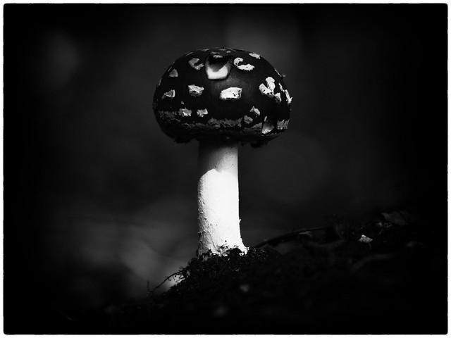 Nature   Black and White #006