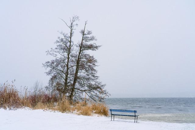 Wintery Lake View