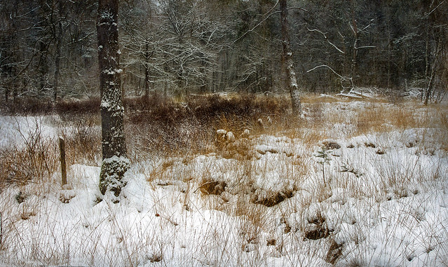 Wintercolors and cold feet