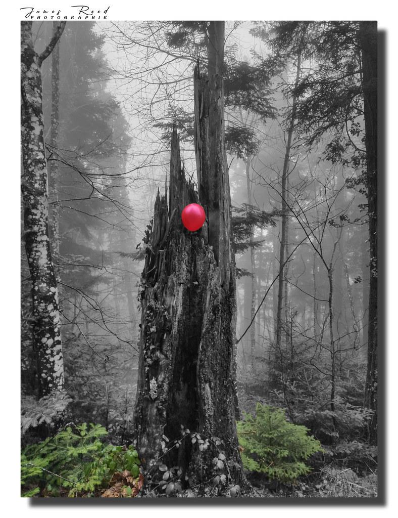 Trilogie du ballon : L'arbre...