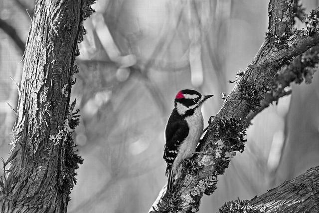 my woodpecker teacher